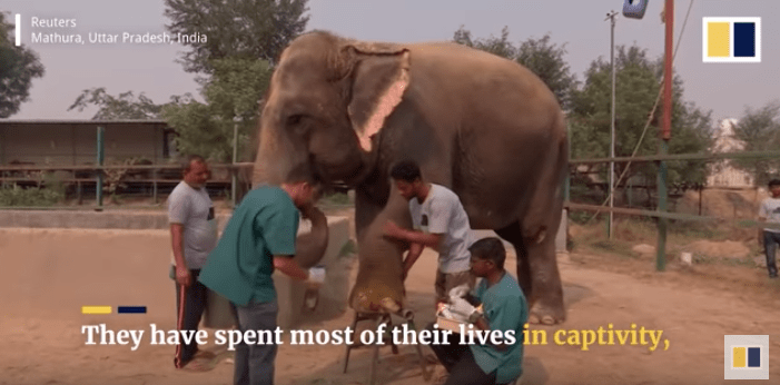 India's First Elephant Hospital Just Opened and Animal Activists Agree It's a Step in the Right Direction