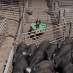 Cargill's New Robotic Cowboy Does The Most Dangerous Jobs On The Farm In A New Bid For Worker Safety
