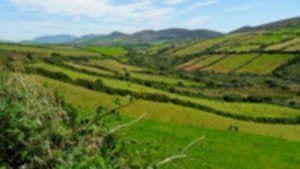 Dingle County Kerry Ireland