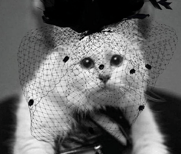 Meet Choupette; Fashion's Richest Cat