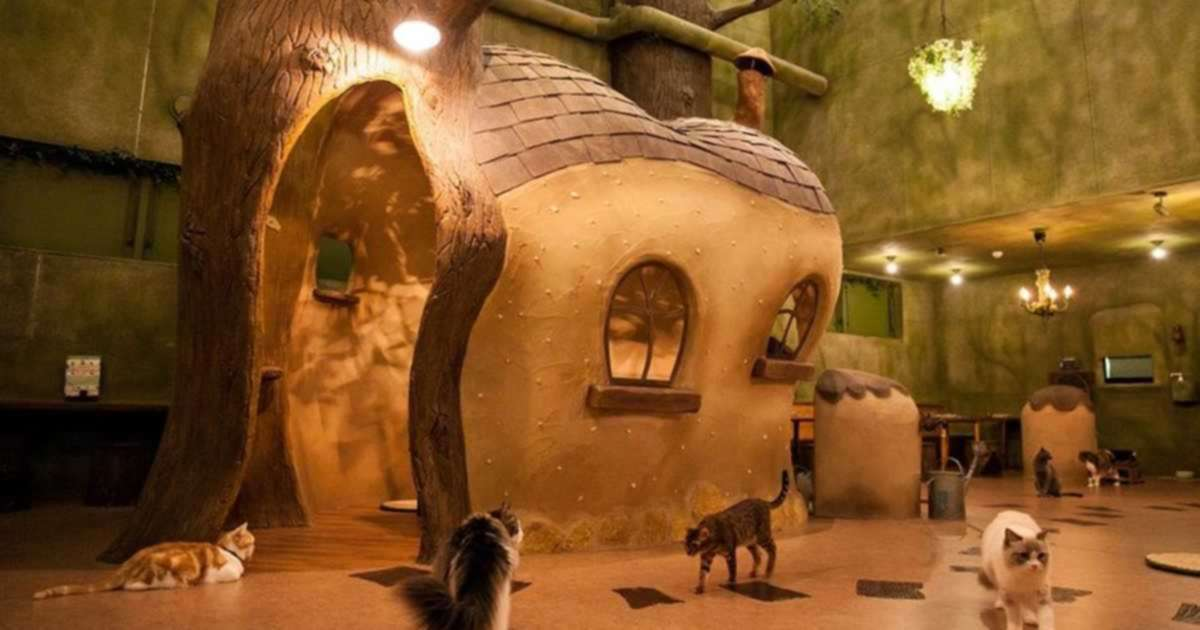 Vancouver Is Getting A Totoro-Inspired Cat Cafe