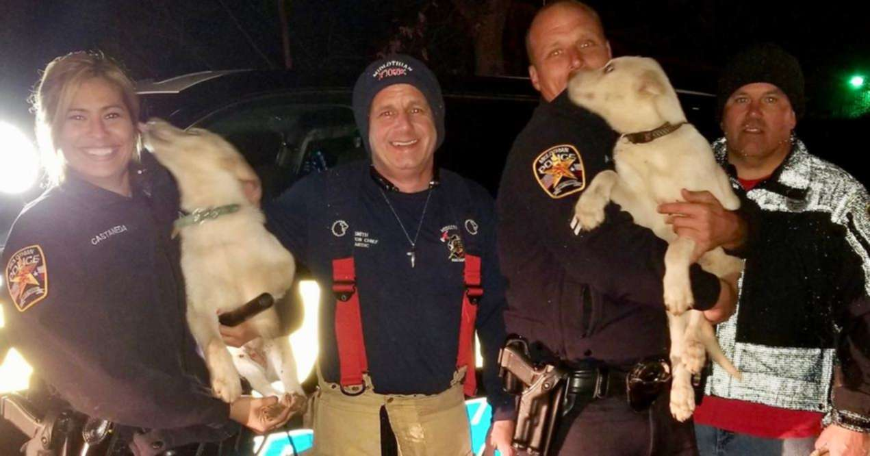 City Workers Save Puppies Stuck in Drain Pipe