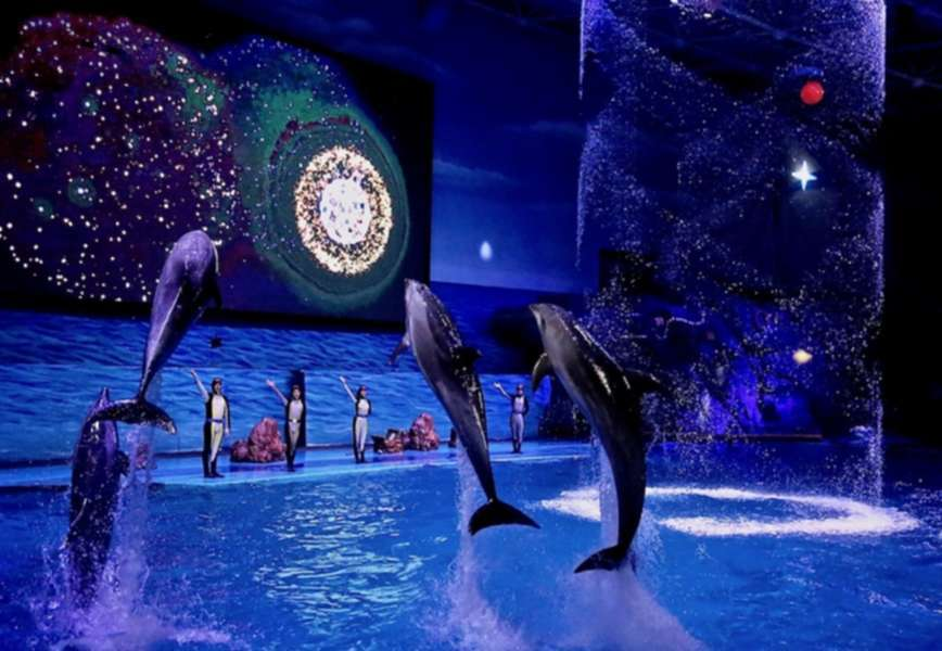 Why It's Time to Abolish Marine Theme Parks