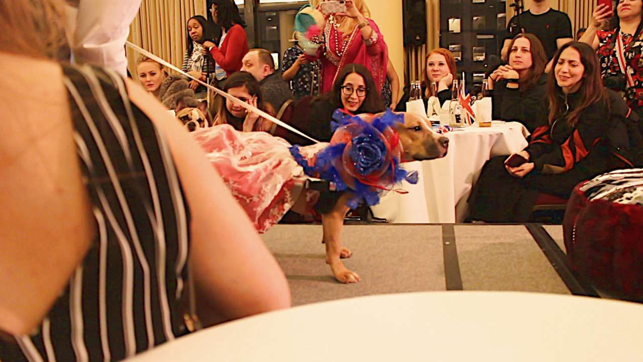 How a Handicapped Rescue Dog From Texas Ended Up starring in a New York City Fashion Show