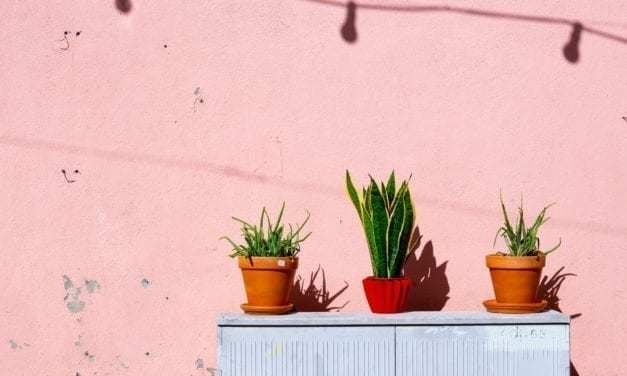 Five House Plants You Won't Kill This Summer