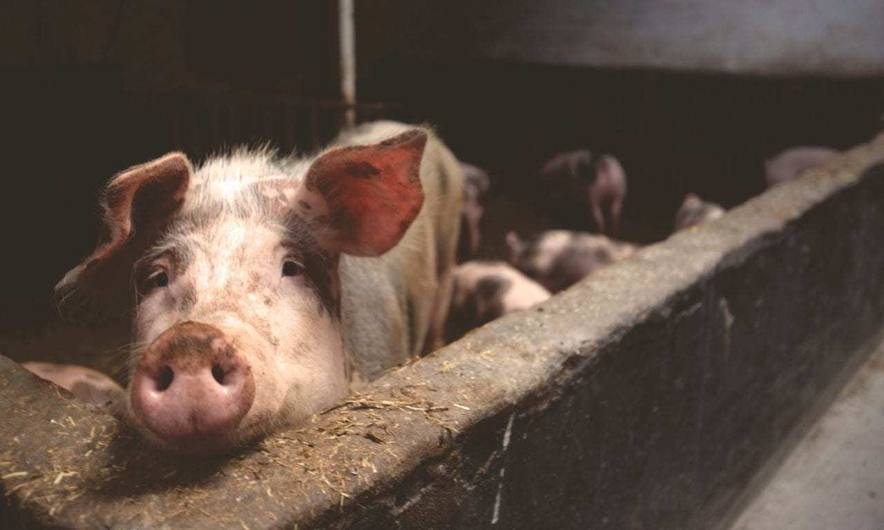 This Is Why Pork Is Getting More Expensive