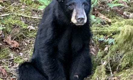 Friendly Bear Cub Killed Because People Fed And Took Selfies With Him