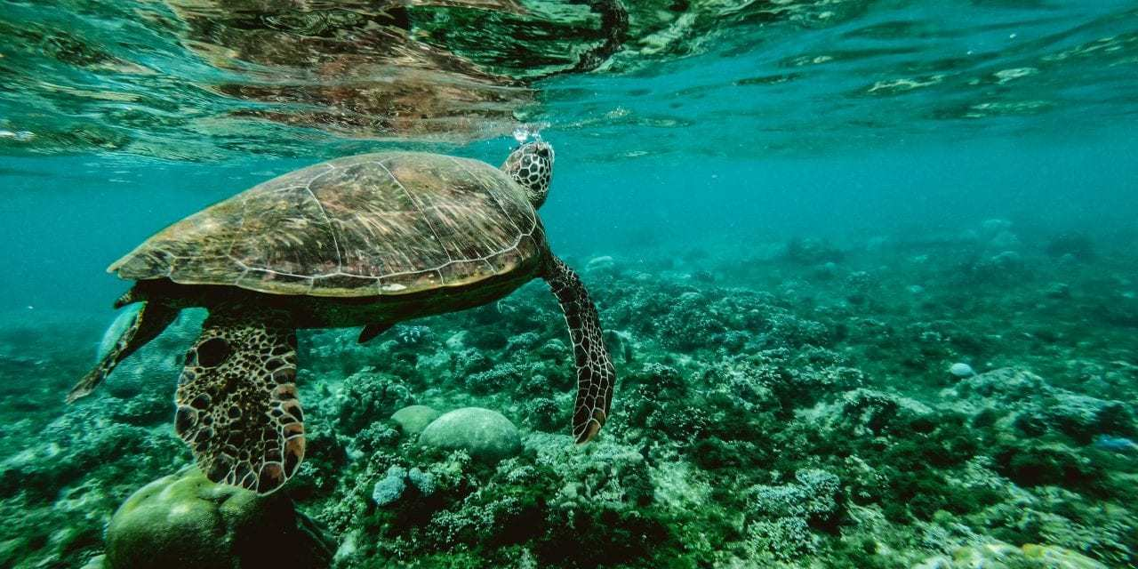 """Shocking New Documentary from SaveTheReef Highlights Destructive Effects of Global Pollution<span class=""""wtr-time-wrap after-title""""><span class=""""wtr-time-number"""">3</span> min read</span>"""