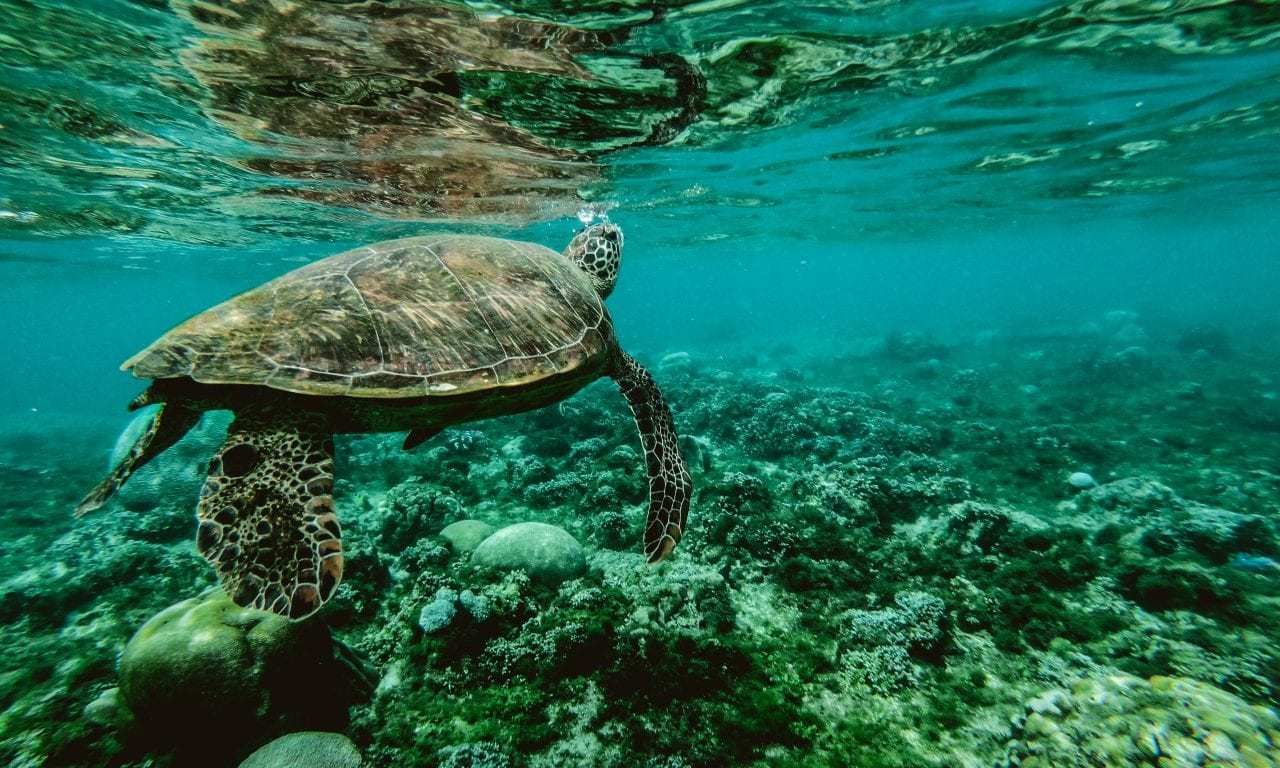 Shocking New Documentary from SaveTheReef Highlights Destructive Effects of Global Pollution