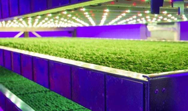Intelligent Growth Solutions grabs £5.4M for Scotland's vertical farms