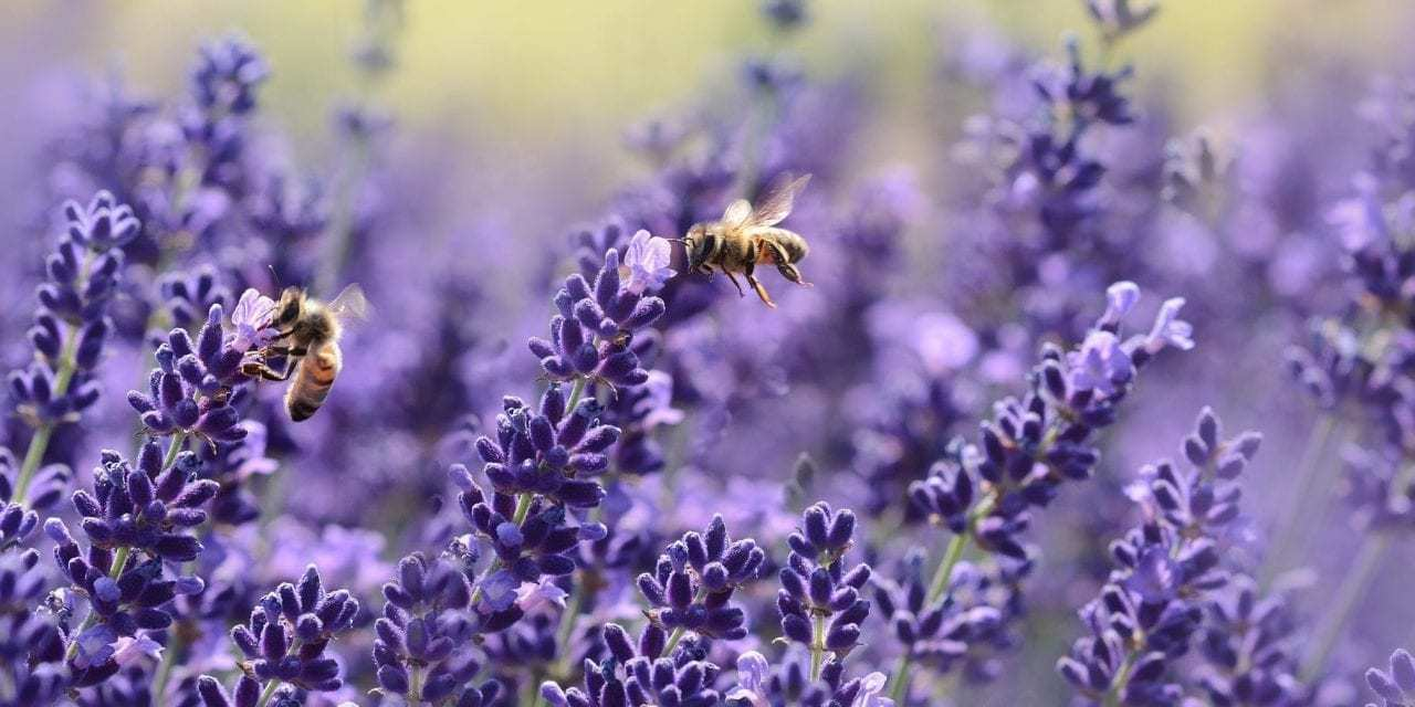 """France Has Banned All Five Bee-Killing Pesticides<span class=""""wtr-time-wrap after-title""""><span class=""""wtr-time-number"""">3</span> min read</span>"""