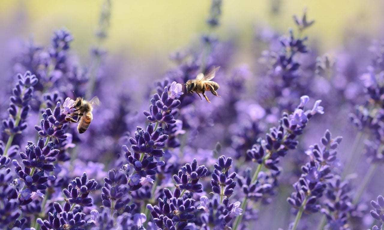 France Has Banned All Five Bee-Killing Pesticides