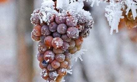 Wine Down and Chill: as in, Icy Chill