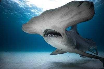 Why 'Shark Week' Has Become A Global Phenomena