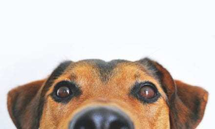 Love your pet, but don't want your house to smell like them? How to dog-odorize naturally