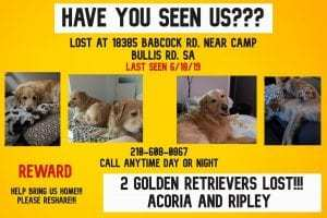 Missing dogs: Acoria and Ripley.