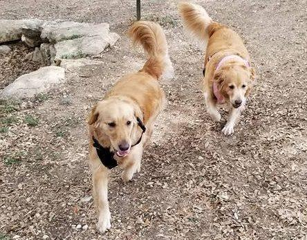 Missing dogs: Acoria and Ripley