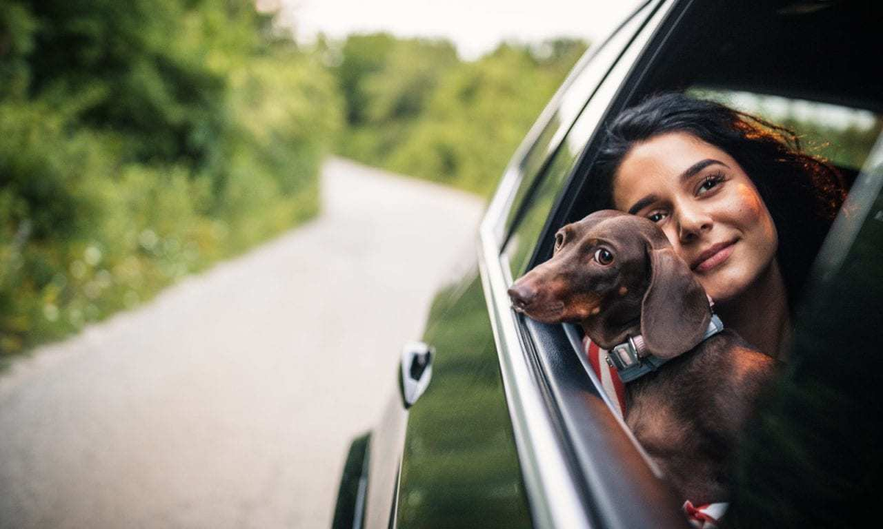You Can Soon Uber With Your Pet