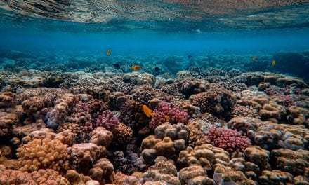Coral Gardeners Are Rebuilding French Polynesia's Reefs—And You Can Help