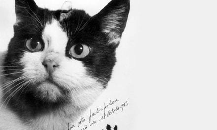 Félicette, the First Cat in Space Gets Special Memorial In France.