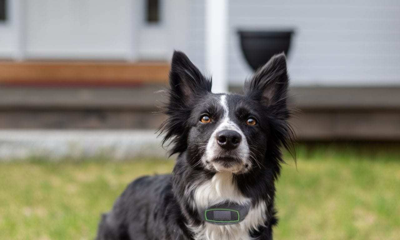 CES 2020 Preview: GPS Technology has Gone to the Dogs With SpotOn's New Smart Collar