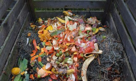 As Food Waste Increases Globally, Here Is What You Need To Know