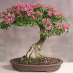 How To Grow Bonsai Trees At Home