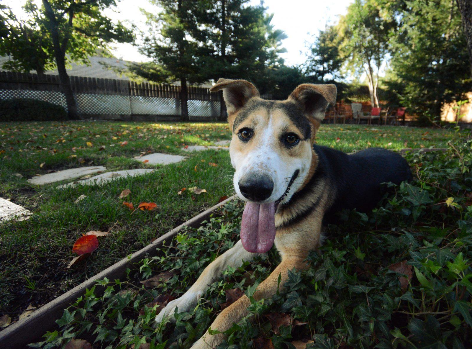 Keep track of your furry friend with Tractive