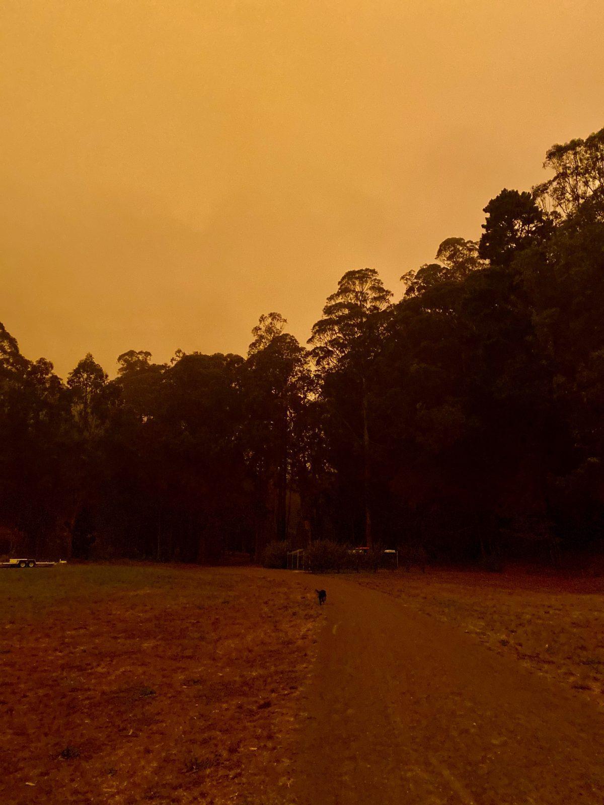 Bay Area Smoke