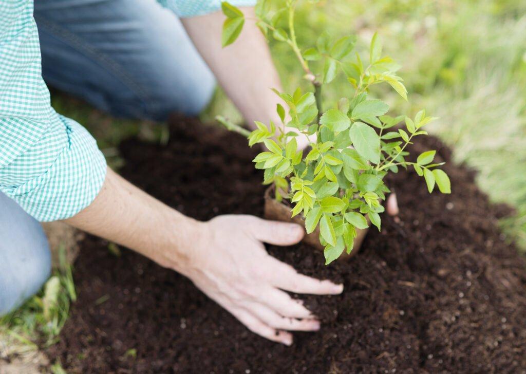 garden hoe