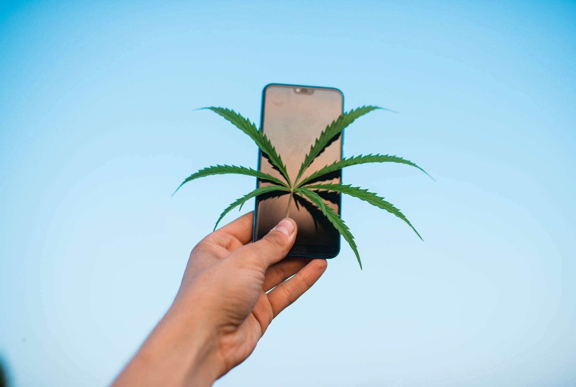 cannabis sms marketing alternatives